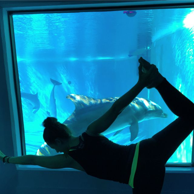 Yoga with the Dolphins