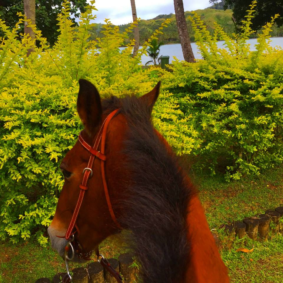 horesback riding fiji